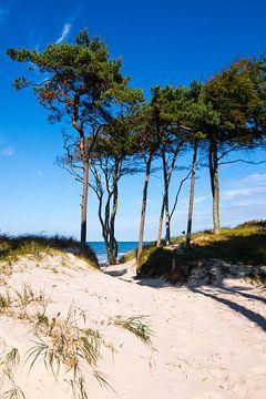 Ostsee - Weststrand auf dem Darß sur Reiner Würz / RWFotoArt