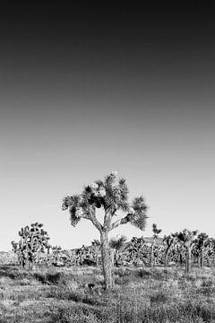 Joshua Tree National Park | Monochrom von Melanie Viola