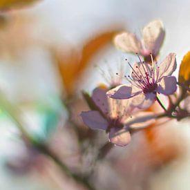 Fleur de printemps sur Marianna Pobedimova