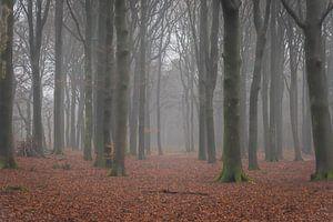 Hoekelumse bos van