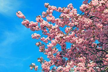 Bloeiende boom van BVpix