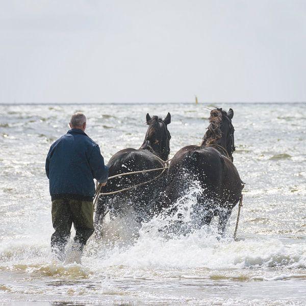 Paardenreddingsboot op Ameland van Marjan Noteboom
