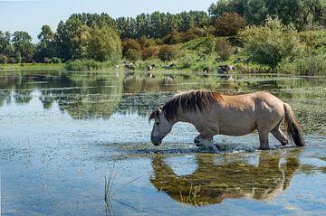 Blaauwe Kamer- zwemmend paard 01 von Cilia Brandts