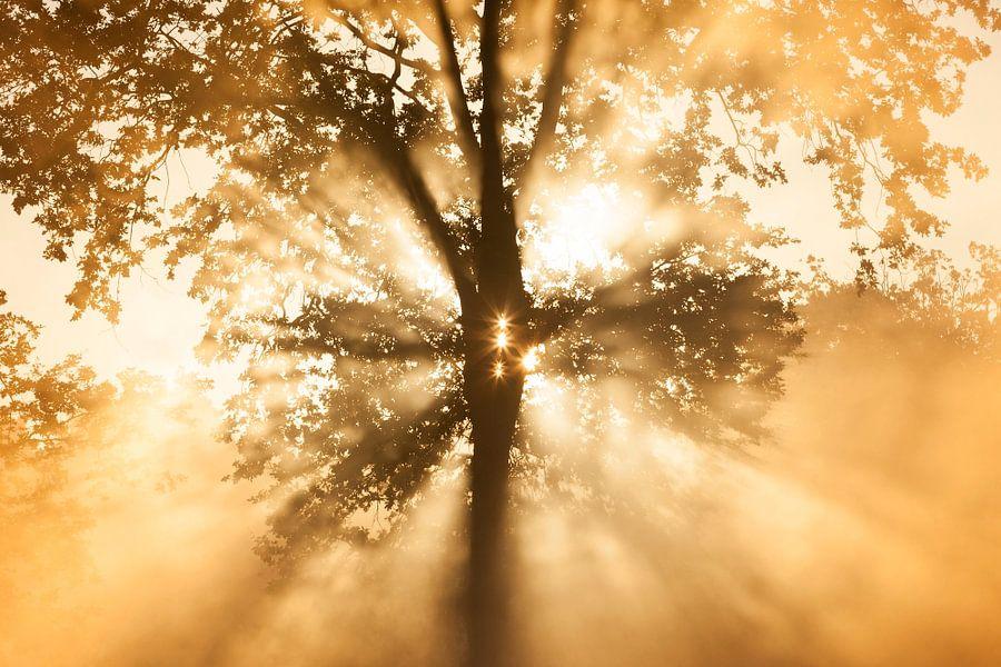 Zonnestralen van Bob Luijks