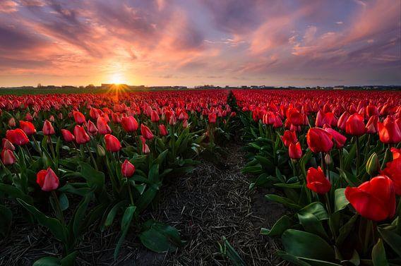 Perennial Red van Martijn van der Nat