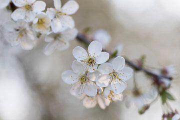 Blüte von Vera Decock