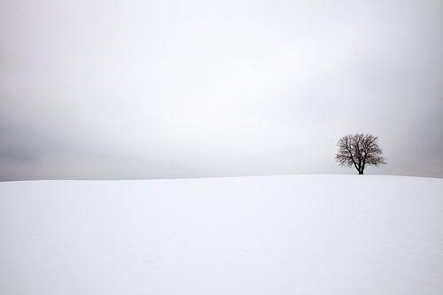 Winterlandschap met een eenzame boom