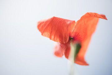 poppy sur Hilde Van Hove