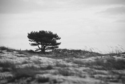 Tree in dunes von Mariska Hofman