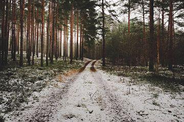 Chemin forestier dans la forêt d'hiver sur Skyze Photography by André Stein