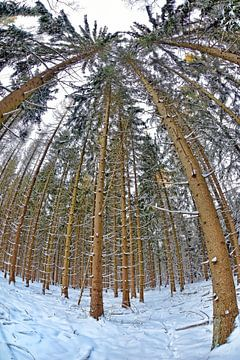 Winter Forest van Ben Töller