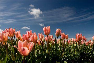 Roze tulpen van Simone Meijer