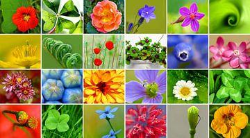 Flower-Power van Caroline Lichthart