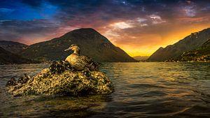 eenden aan het luganomeer