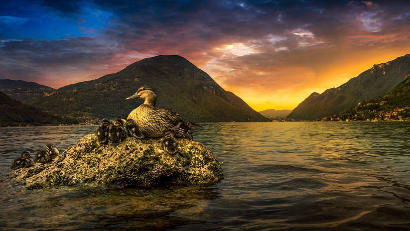 eenden aan het luganomeer van Rubin Versigny