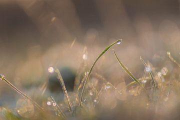 zilver en goud gras van Tania Perneel