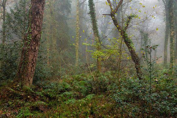 Bos in de regen