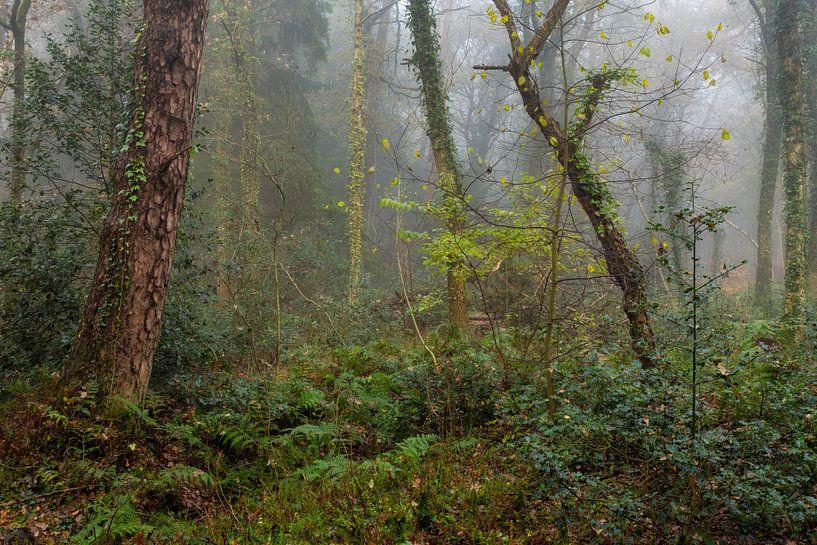Bos in de regen van Peter Bolman