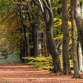 Bos in herfstkleuren op de Veluwe van Hilda Weges