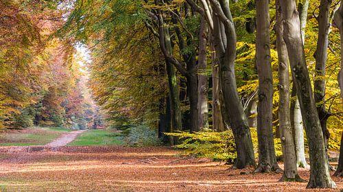 Bos in herfstkleuren op de Veluwe