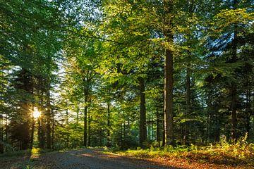 Waldweg im Romatischen Wald von Jürgen Wiesler