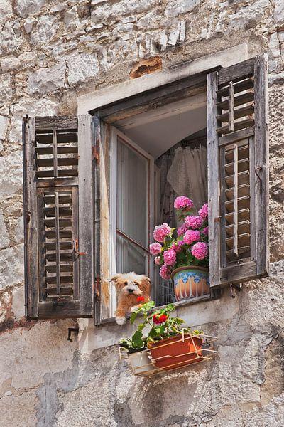 Fenster mit blumen auf leinwand als poster oder kunstdruck for Fenster 40x60