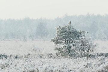 Buizerd in wit bevroren landschap van Karla Leeftink