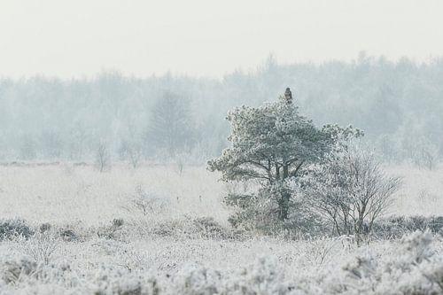 Buizerd in wit bevroren landschap van
