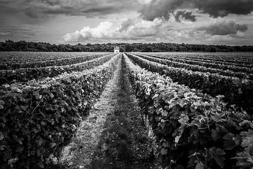 Wijngaard onder een wolkendek