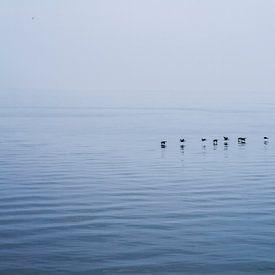 Lake Ontario, Canada van Rob Altena