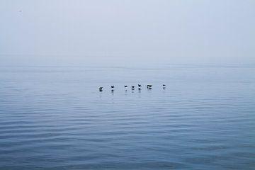 Lake Ontario, Canada van