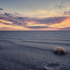Sfeervolle foto van een schelp op het strand von Edwin van Wijk