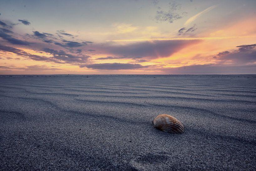 Sfeervolle foto van een schelp op het strand van Edwin van Wijk