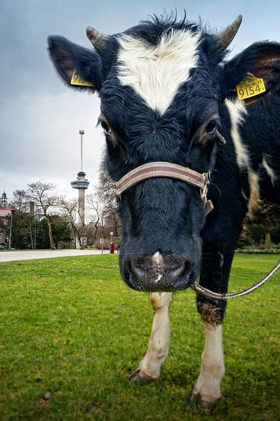 Koe in Het Park bij de Euromast / Rotterdam van Rob de Voogd / zzapback