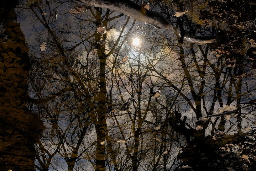 Weerspiegeling van bomen, wolken en zon in het water van Kristof Lauwers