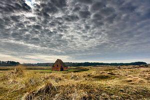 Schapenboet de Nederlanden Texel