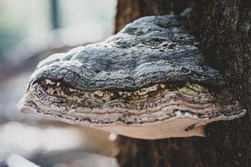 Atmosphärischer Tundra-Pilz auf einem Baumstamm von Fotografiecor .nl