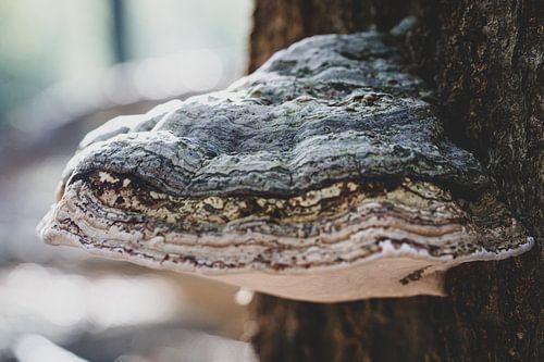 Sfeervolle tonderzwam op een boomstam