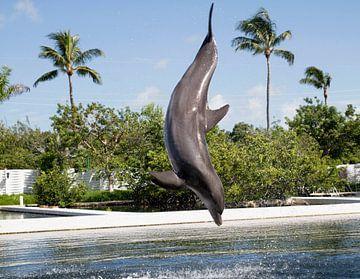 Delphin von Bonnie Wage