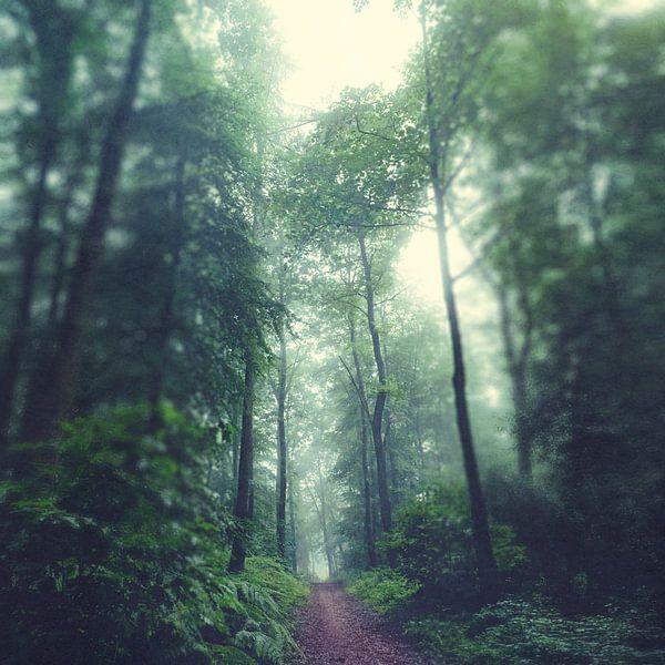 Forest Path van Dirk Wüstenhagen
