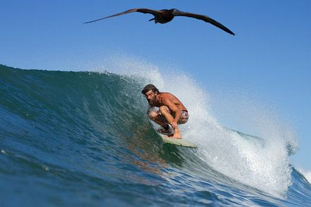 Surfer und der Vogel