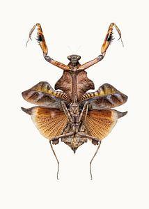Rariteitenkabinet_Insecten_06
