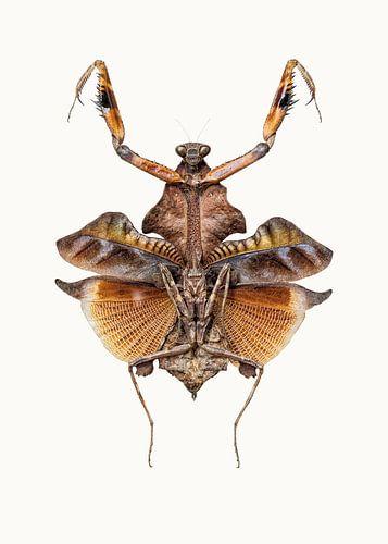 Rariteitenkabinet_Insecten_06 van