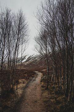 Winterlandschaft von Paulien van der Werf