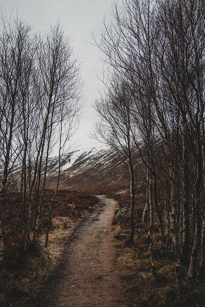 Winters landschap van Paulien van der Werf