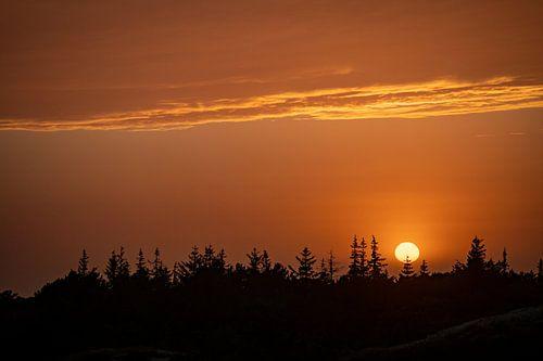 zonsondergang met bomen