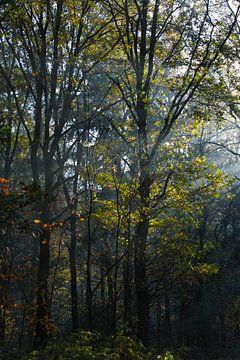 Die Bäume von Joran Quinten