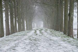 Paysage de neige sur Jasper Los