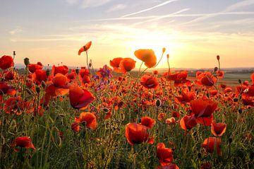 Poppys Sunset sur Steffen Gierok