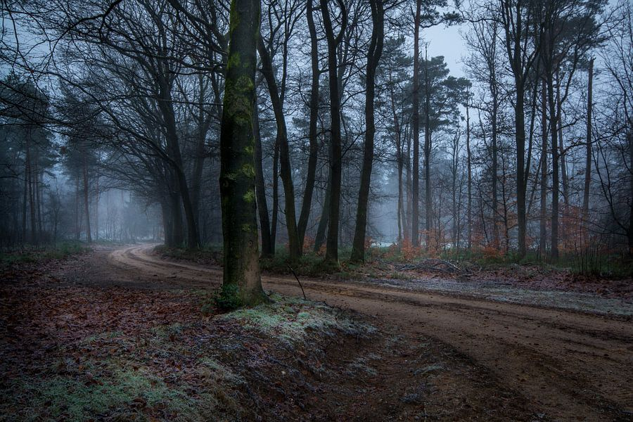 Path through the forrest van Mario Visser